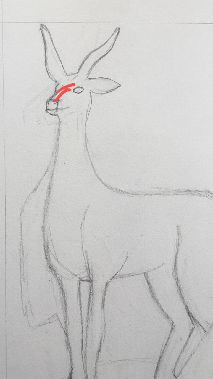 Passo a passo desenho 4